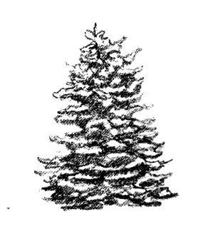Kresba stromu_3